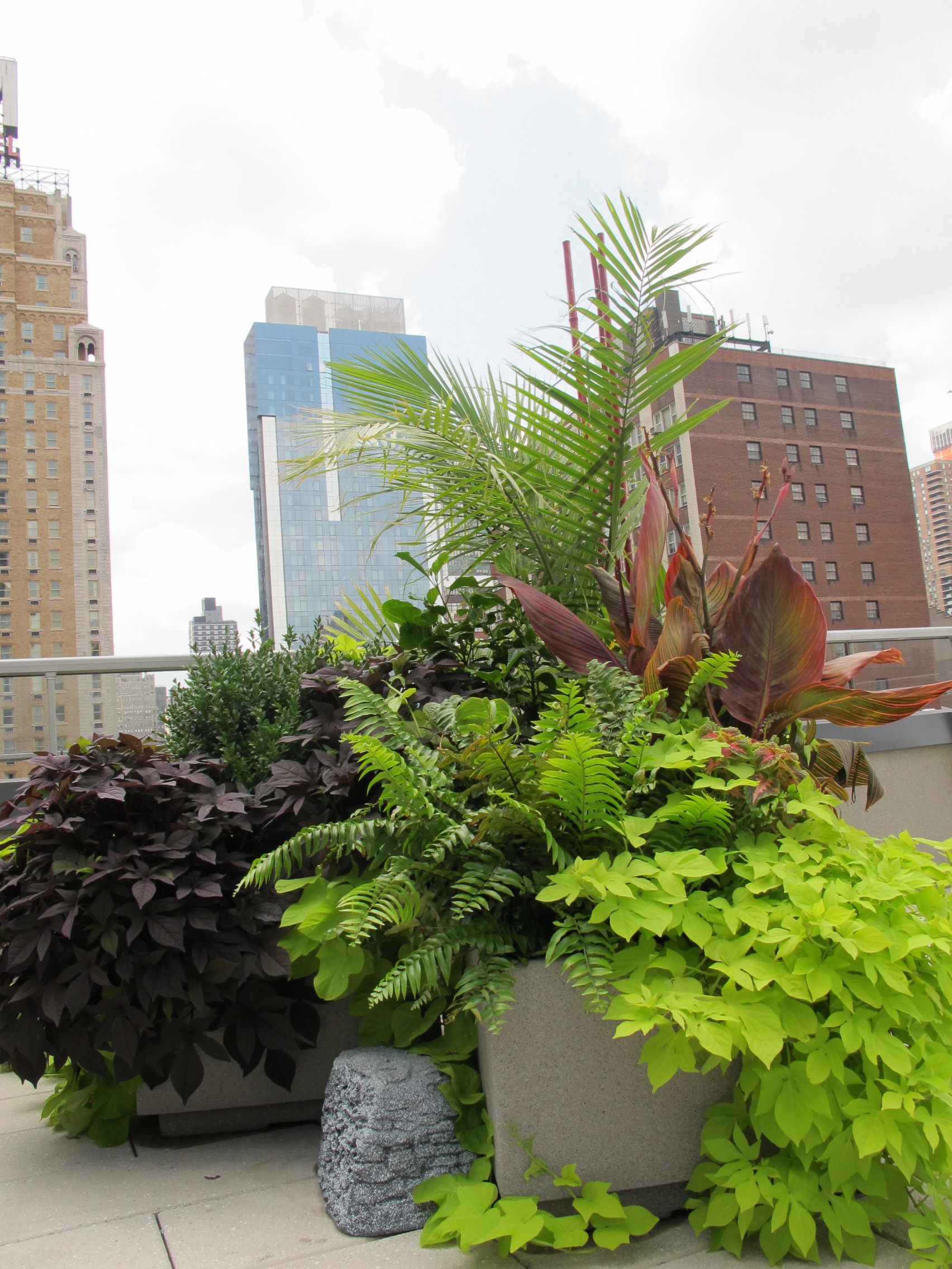 Tropical Roof Deck City Gardens Of Ny