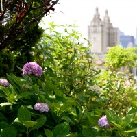 Upper West Side Roof Deck Garden
